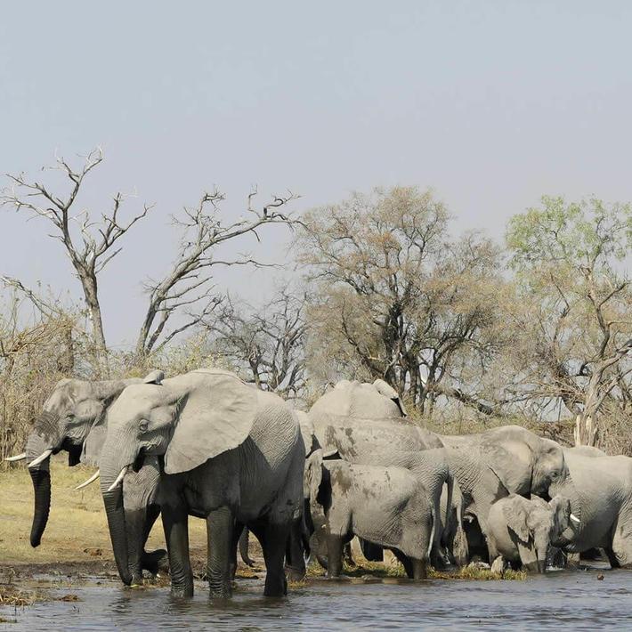Elephants. Photo: NACSO/WWF in Namibia