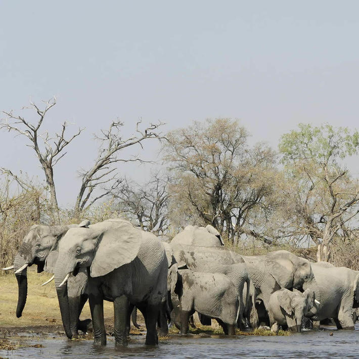 Photo: NACSO/WWF in Namibia