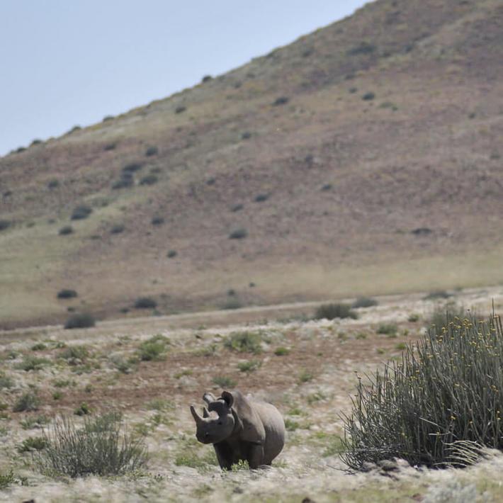 Photo: NACSO/WWF in Namibia