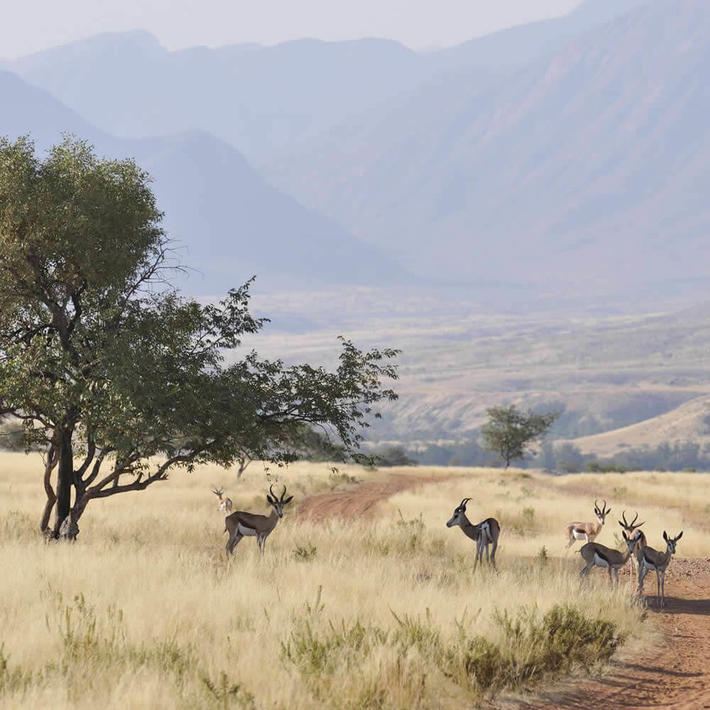 Marienfluss Conservancy. Photo: NACSO/WWF