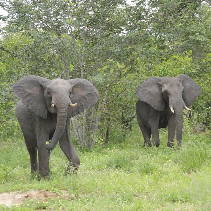 Photo: NACSO/WWF